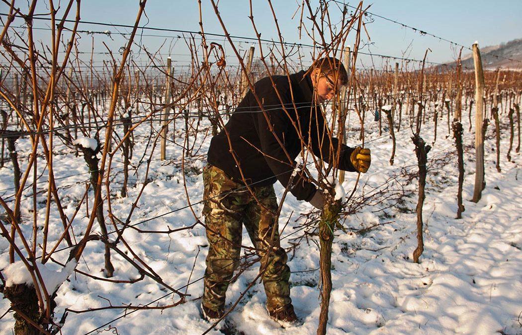 Travaux de la vigne