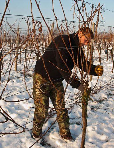 taille de la vigne_01